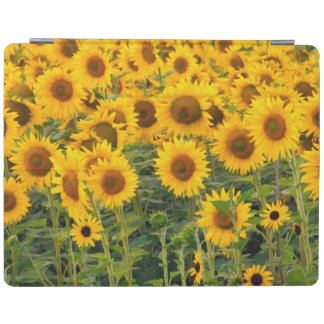 Na, USA, Colorado, Sunflowers iPad Cover