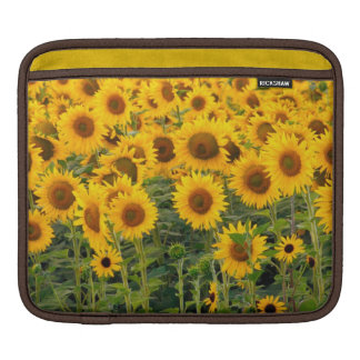 Na, USA, Colorado, Sunflowers iPad Sleeve