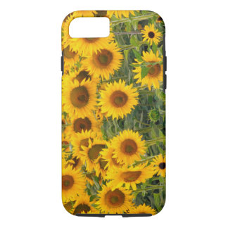 Na, USA, Colorado, Sunflowers iPhone 8/7 Case