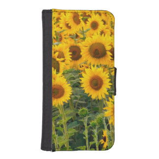 Na, USA, Colorado, Sunflowers iPhone SE/5/5s Wallet Case