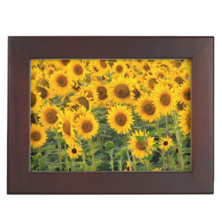 Na, USA, Colorado, Sunflowers Keepsake Box