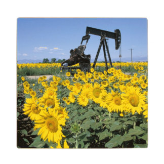 Na, USA, Colorado, Sunflowers, Oil Derrick Wood Coaster