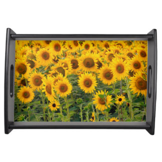 Na, USA, Colorado, Sunflowers Serving Tray