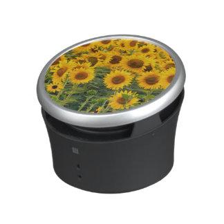 Na, USA, Colorado, Sunflowers Speaker