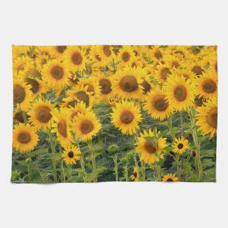 Na, USA, Colorado, Sunflowers Tea Towel