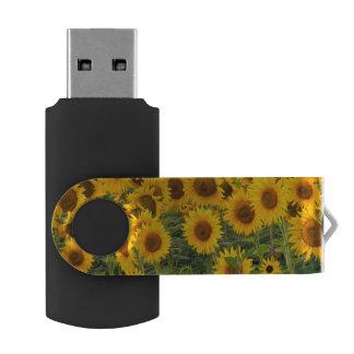 Na, USA, Colorado, Sunflowers USB Flash Drive