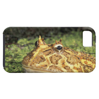 NA, USA, Florida, Miami.  Brazilian horned frog iPhone 5 Case