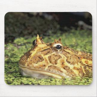 NA, USA, Florida, Miami.  Brazilian horned frog Mouse Pad