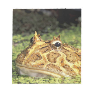 NA, USA, Florida, Miami.  Brazilian horned frog Notepad
