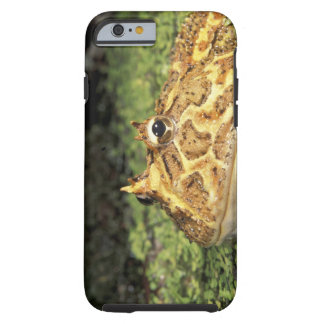 NA, USA, Florida, Miami.  Brazilian horned frog Tough iPhone 6 Case