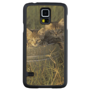 NA, USA, Florida, rural Florida. Eight-week-old Maple Galaxy S5 Case