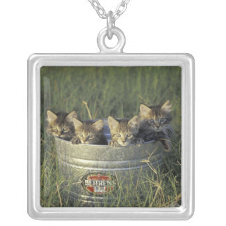 NA, USA, Florida, rural Florida. Eight-week-old Silver Plated Necklace