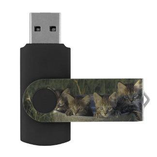 NA, USA, Florida, rural Florida. Eight-week-old USB Flash Drive