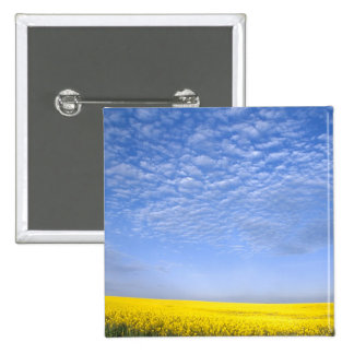 Na, USA, ID, Grangeville, Field of Canola Crop 15 Cm Square Badge