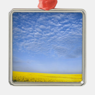 Na, USA, ID, Grangeville, Field of Canola Crop Christmas Ornament