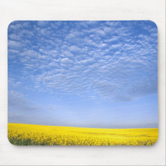 Na, USA, ID, Grangeville, Field of Canola Crop Mouse Mat