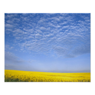 Na USA ID Grangeville Field of Canola Crop Poster