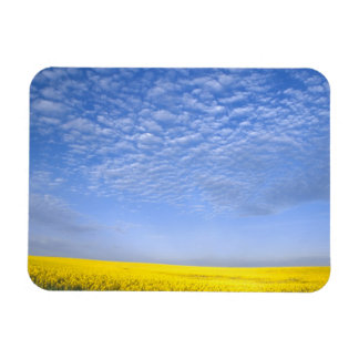 Na, USA, ID, Grangeville, Field of Canola Crop Rectangular Photo Magnet