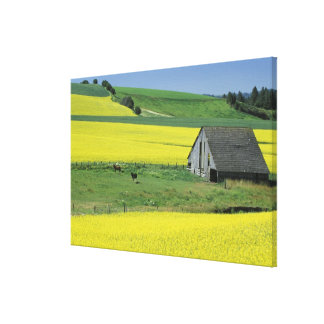 NA, USA, Idaho, near Potlatch, Canola and old Canvas Print