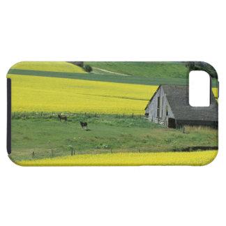 NA, USA, Idaho, near Potlatch, Canola and old iPhone 5 Cover