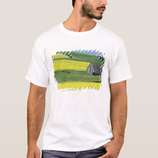 NA, USA, Idaho, near Potlatch, Canola and old T-Shirt