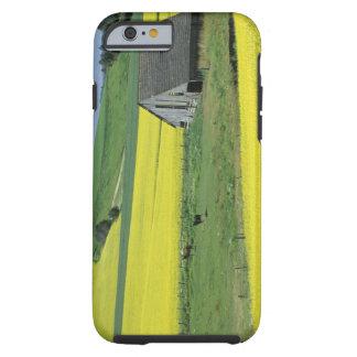NA, USA, Idaho, near Potlatch, Canola and old Tough iPhone 6 Case