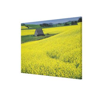 NA, USA, Idaho, near Potlatch, Wooden barn and Canvas Print