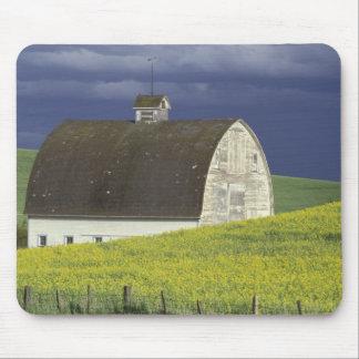 NA, USA, Idaho, south of Genesse, Canola field Mouse Pad