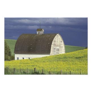 NA, USA, Idaho, south of Genesse, Canola field Photo Print