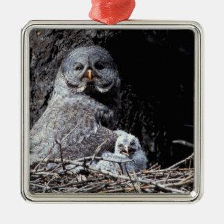 NA, USA, Idaho, Teton Valley. Great gray owl Christmas Ornament