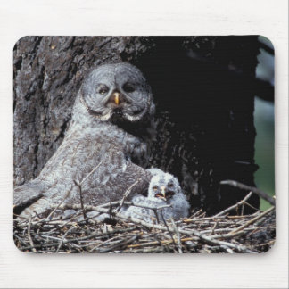 NA, USA, Idaho, Teton Valley. Great gray owl Mouse Pad