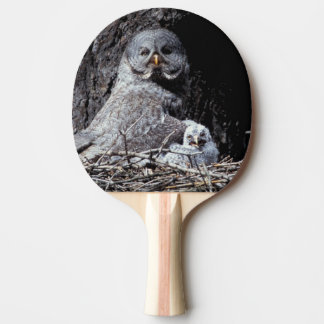 NA, USA, Idaho, Teton Valley. Great gray owl Ping Pong Paddle