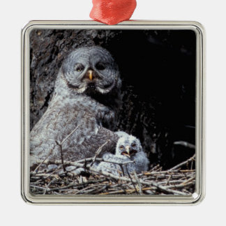NA, USA, Idaho, Teton Valley. Great gray owl Silver-Colored Square Decoration