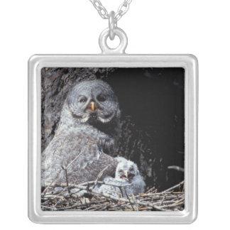 NA, USA, Idaho, Teton Valley. Great gray owl Silver Plated Necklace
