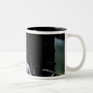 NA, USA, Idaho, Teton Valley. Great gray owl Two-Tone Coffee Mug