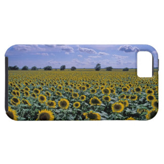 NA, USA, Kansas, Sunflower crop iPhone 5 Covers