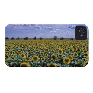 NA, USA, Kansas, Sunflower crop iPhone 4 Case-Mate Case