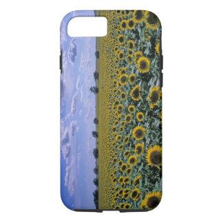 NA, USA, Kansas, Sunflower crop iPhone 8/7 Case