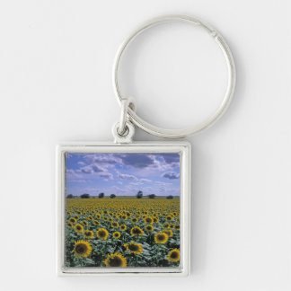 NA, USA, Kansas, Sunflower crop Key Ring