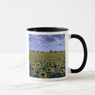 NA, USA, Kansas, Sunflower crop Mug