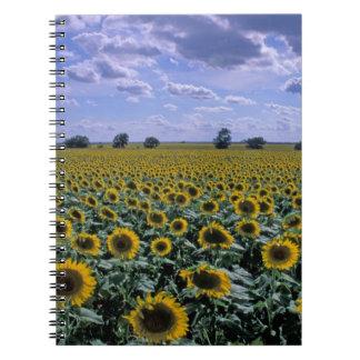 NA, USA, Kansas, Sunflower crop Notebooks