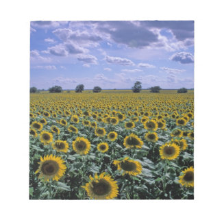 NA, USA, Kansas, Sunflower crop Notepad