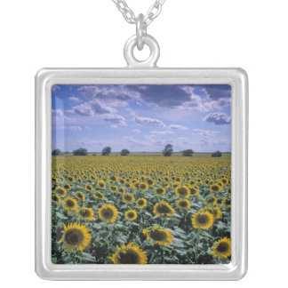 NA, USA, Kansas, Sunflower crop Silver Plated Necklace