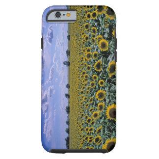 NA, USA, Kansas, Sunflower crop Tough iPhone 6 Case