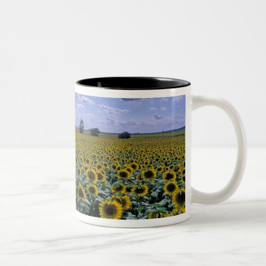 NA, USA, Kansas, Sunflower crop Two-Tone Coffee Mug