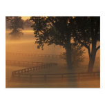 NA, USA, Kentucky. Foggy sunrise on Kentucky Post Card