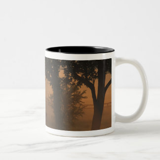NA, USA, Kentucky. Foggy sunrise on Kentucky Two-Tone Coffee Mug