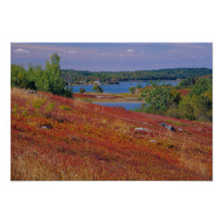 NA, USA, Maine. Blueberry Barrens. Posters