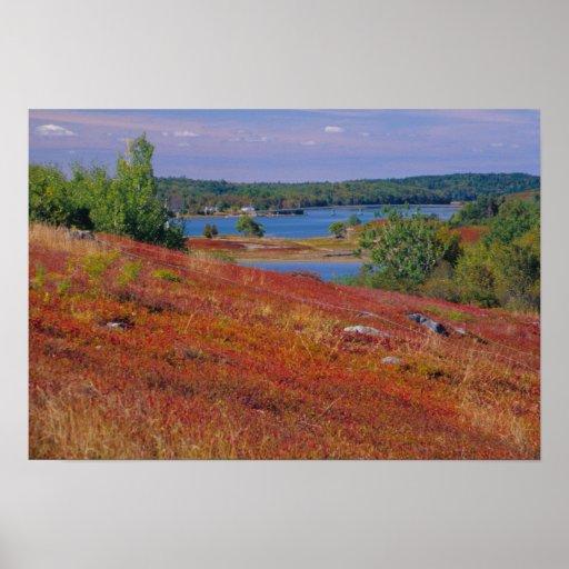 NA, USA, Maine. Blueberry Barrens. Posters