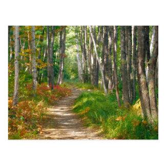 NA, USA, Maine.  Jessup trail in Acadia National Postcard